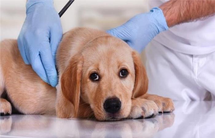 بالبلدي : نصائح منزلية.. 5 أمراض شائعة تعاني منها الكلاب